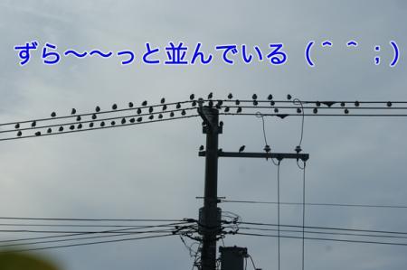 2_20100827004843.jpg