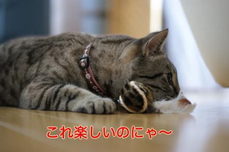 2_20100902150103.jpg