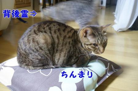 2_20101021101349.jpg