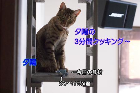 2_20101220005921.jpg