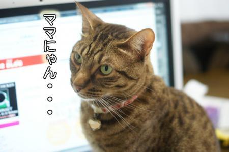2_20101222073207.jpg