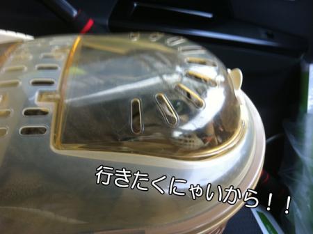2_20101223075202.jpg