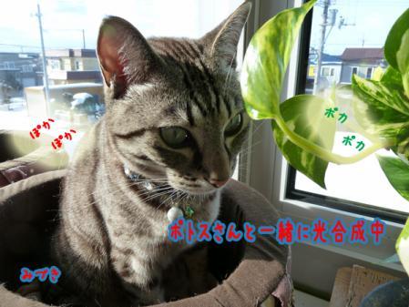 2_20110102080519.jpg