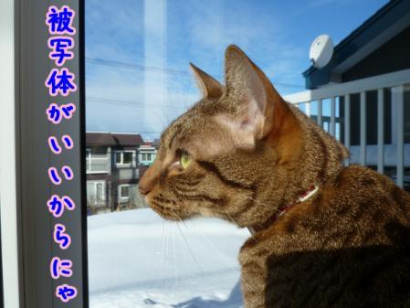 2_20110103084600.jpg