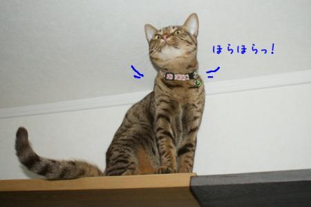 2_20110108092850.jpg
