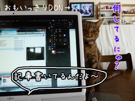 2_20110114142047.jpg