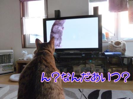 2_20110130091827.jpg