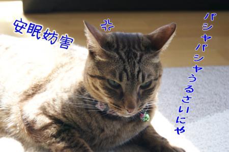 2_20110415095737.jpg