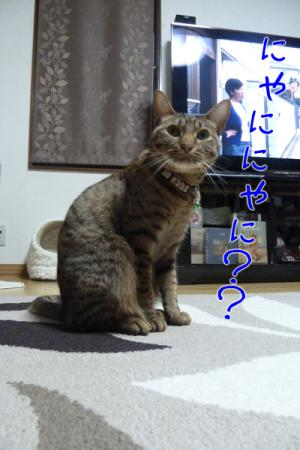 2_20110426230552.jpg