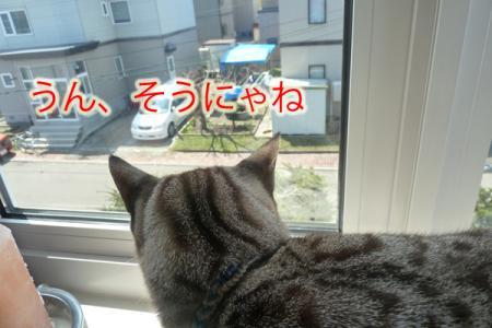 2_20110504080030.jpg
