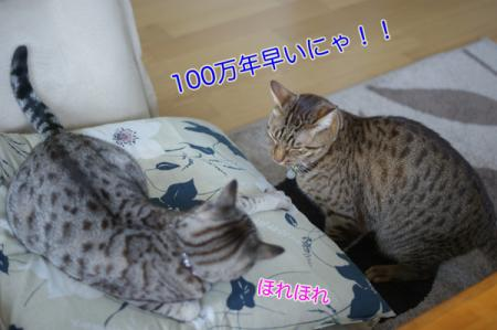 3_20100307084034.jpg