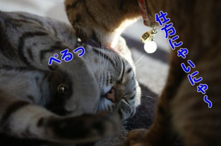 3_20100421133344.jpg