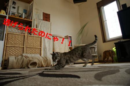 3_20100519100144.jpg
