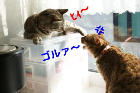 3_20100602134750.jpg