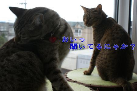 3_20100815004828.jpg