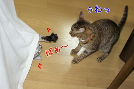 3_20100827004842.jpg