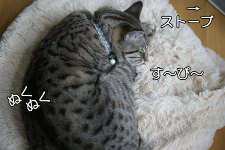 3_20101223075202.jpg