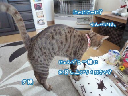 3_20101226141552.jpg