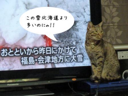 3_20101228211121.jpg