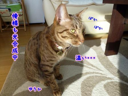 3_20110102080518.jpg