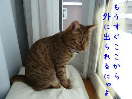3_20110118121825.jpg