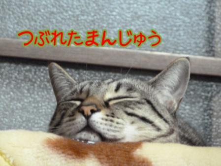 3_20110126105823.jpg