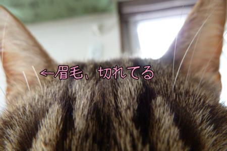 3_20110302165648.jpg