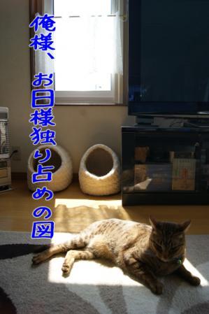 3_20110415095737.jpg