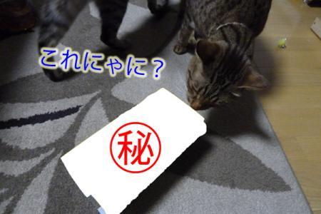 3_20110426231324.jpg