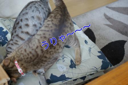 4_20100307084034.jpg