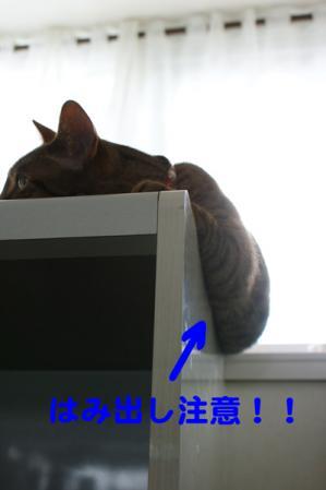 4_20100505104431.jpg
