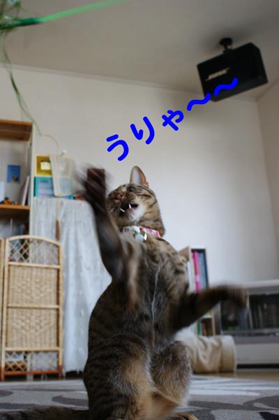 4_20100512115307.jpg