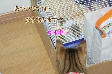 4_20100819090654.jpg