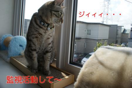 4_20100919065811.jpg