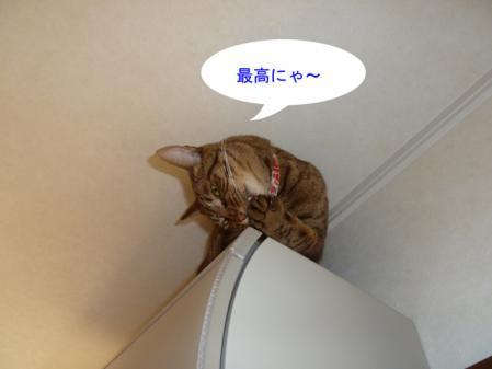 4_20101016104536.jpg