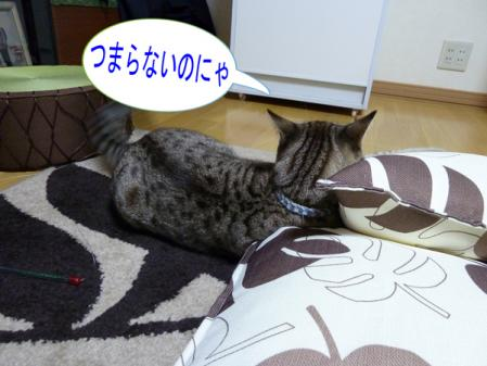 4_20101017234342.jpg
