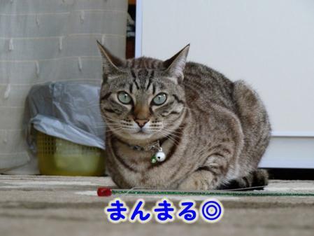 4_20101021101348.jpg