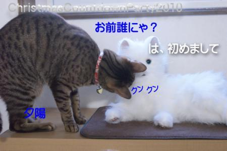 4_20101219135717.jpg