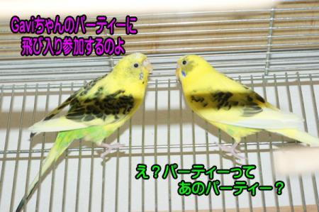 4_20101220214019.jpg
