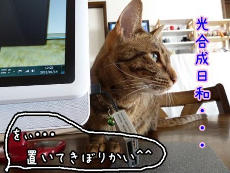 4_20110114142046.jpg