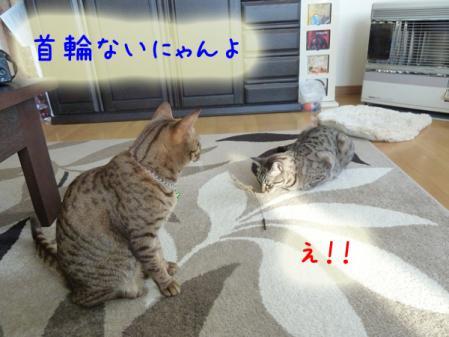 4_20110120100459.jpg