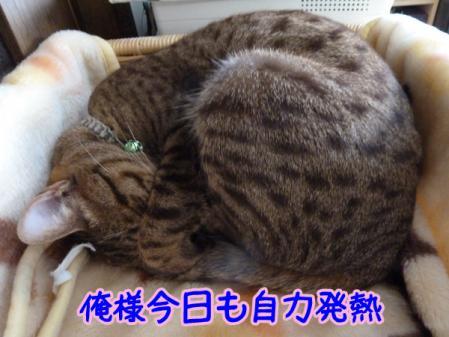 4_20110122091205.jpg