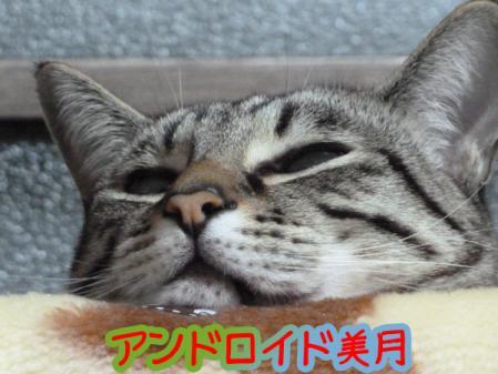 4_20110126105705.jpg