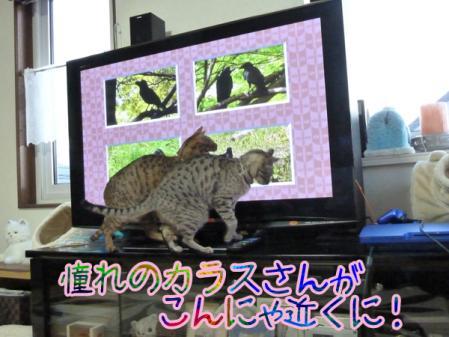4_20110130091826.jpg