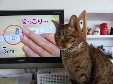 4_20110203083554.jpg