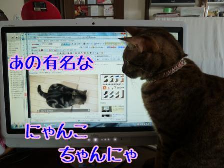 4_20110207064250.jpg