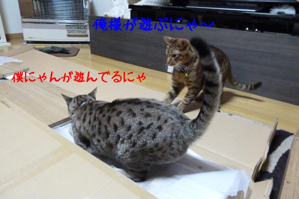 4_20110320094700.jpg