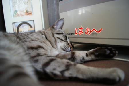 4_20110330125931.jpg
