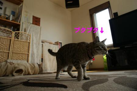 5_20100519100143.jpg