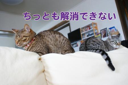 5_20100712111448.jpg